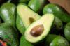 Immagine di Avocado BACON coltivato in Sicilia 4kg